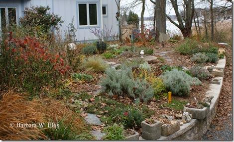 Foliage-front-yard