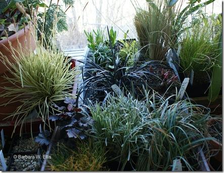 New-Plants