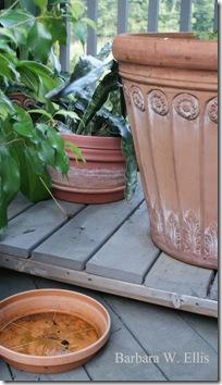 Toad-houseplants