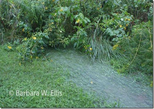 Meadow-runoff