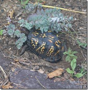 Turtle-nest-side