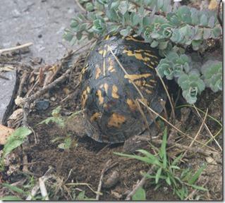 Turtle-nest
