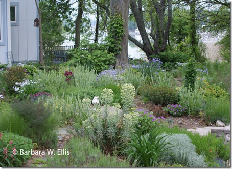 Front-garden-2013
