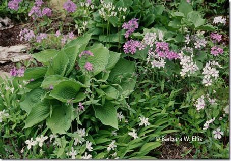 Pennsylvania-garden