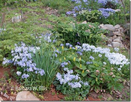 Spring-Garden-2016