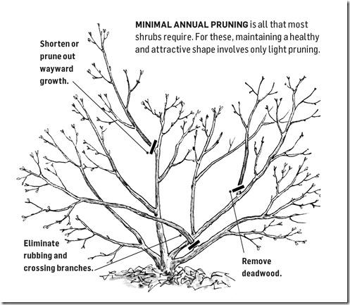 77_ESears_Pruning_HowtoPruneTrees